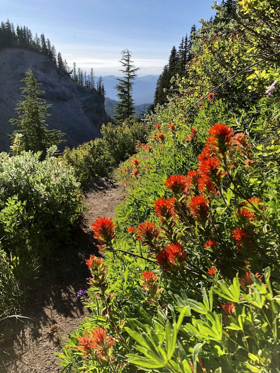 Mount Hood Timberline Trail Near Timberline Lodge August Wildflowers in Bloom