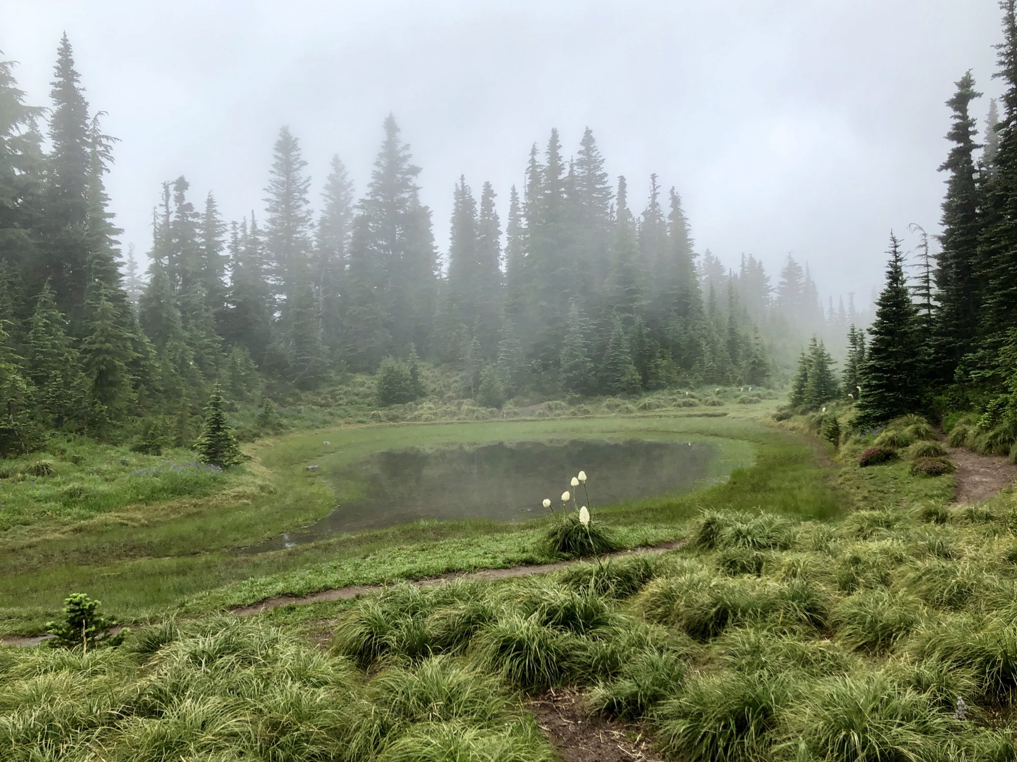 Mount Hood Timberline Trail - Wet Misty Meadow