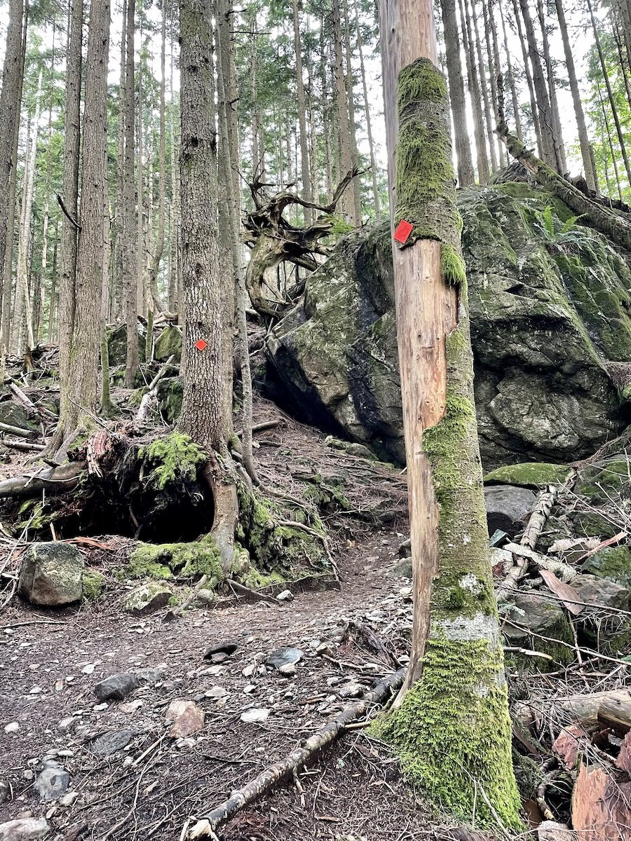 Well-Marked Trail to Alder Flats, Golden Ears Provincial Park