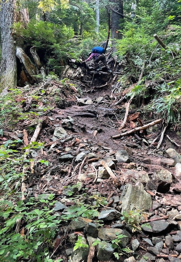 Climbing up a root system on Golden Ears Trail