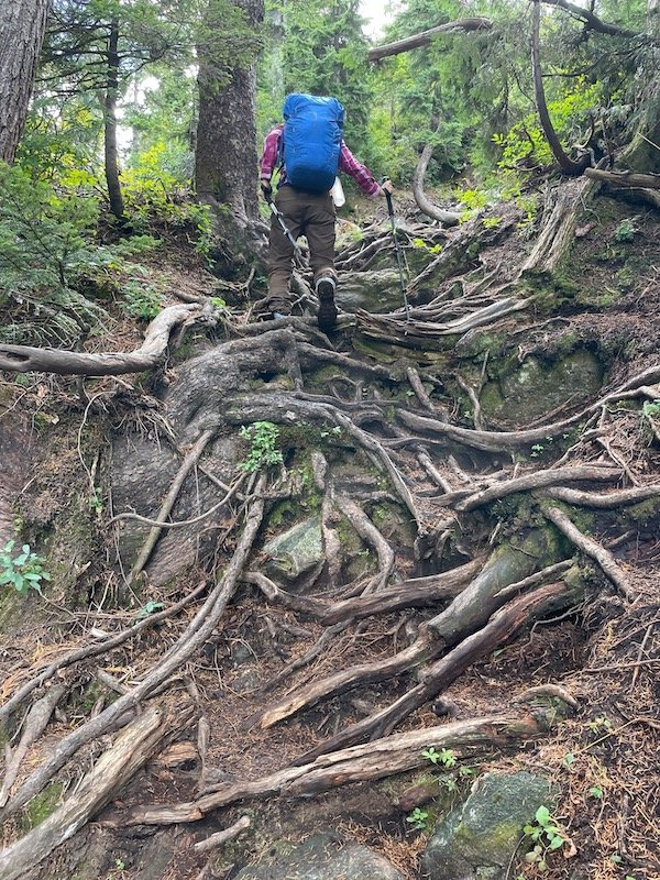 Hiking up a root system on Golden Ears Trail
