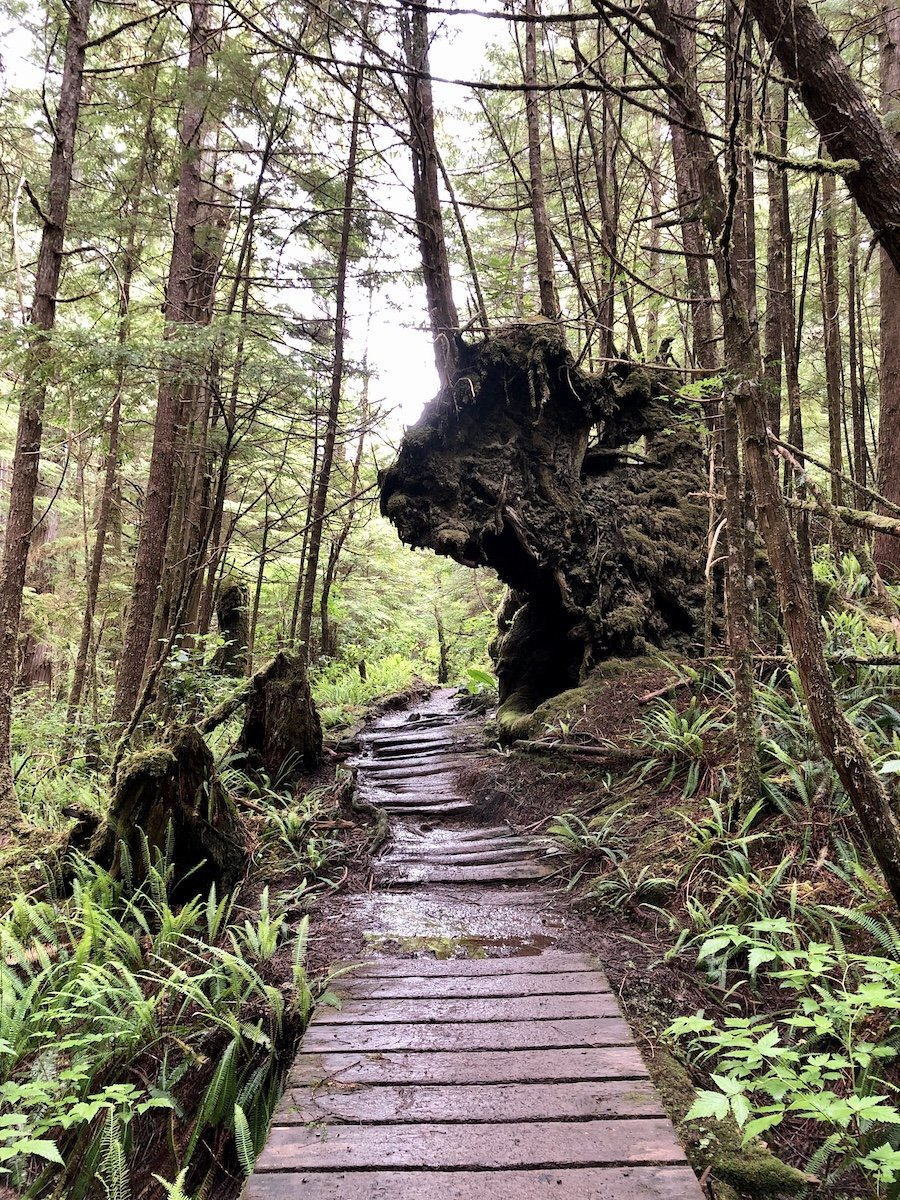 Cape Scott Trail working around the surrounding nature at Cape Scott Provincial Park