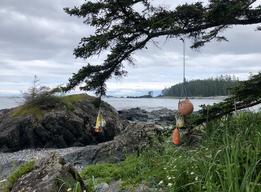 Spirits buoyed on the coastal trail from Shuttleworth Bight to Cape Sutil, North Coast Trail