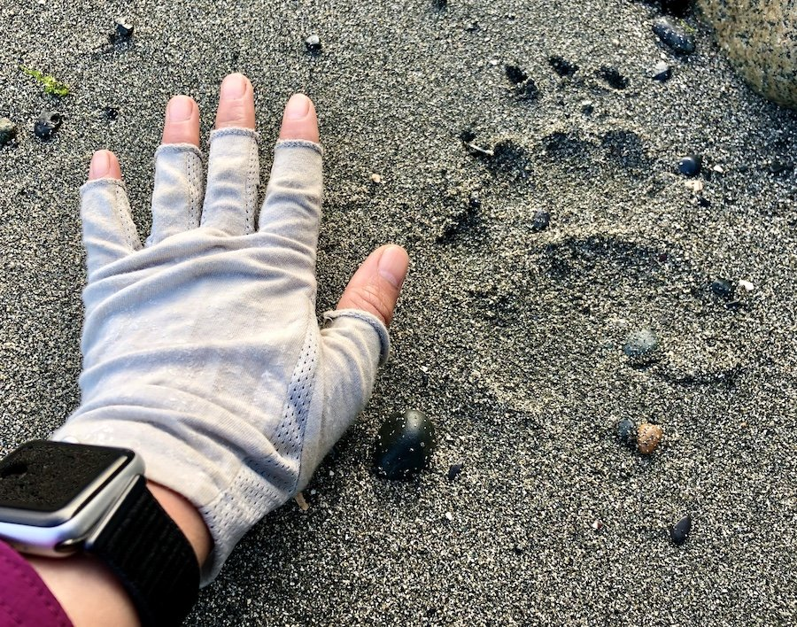 Black bear tracks on the coastal trail, Laura's Creek to Shuttleworth Bight, North Coast Trail